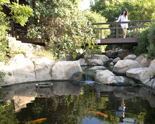 Capo Bay Hotel Gardens & Fish Pond 1